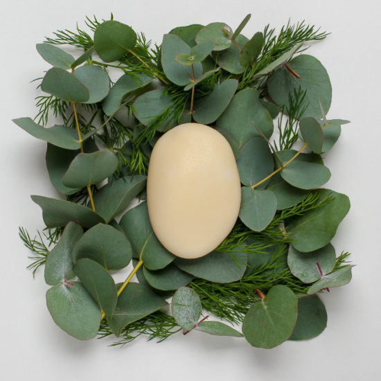 364_Eucalyptus